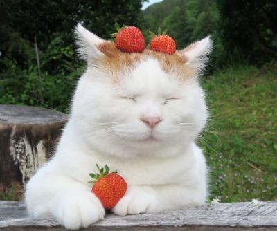 イチゴを猫に与えるのは危険?