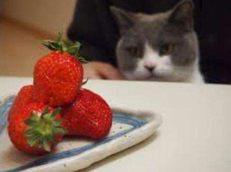 イチゴを猫にあげても大丈夫