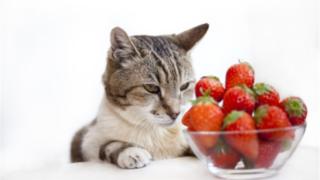 猫とイチゴtop