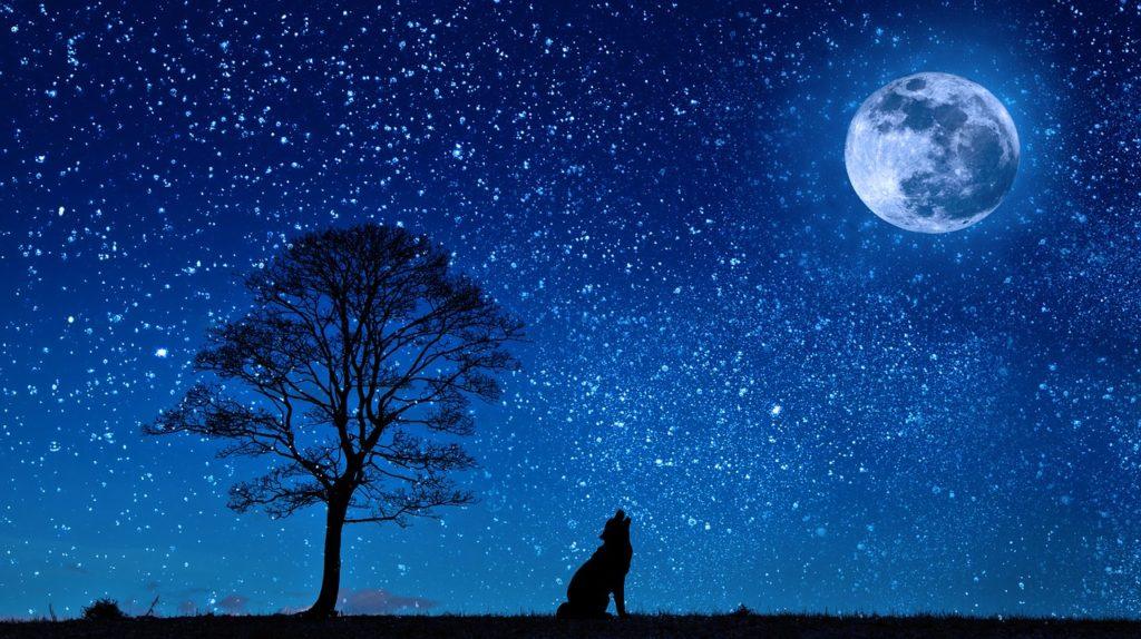 月とおはぎ